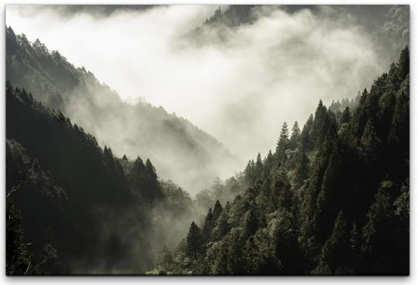 Wald mit Nebel Wandbild in verschiedenen Größen