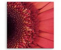 Naturfotografie –  Rote Blüte imn Großdetail auf Leinwand