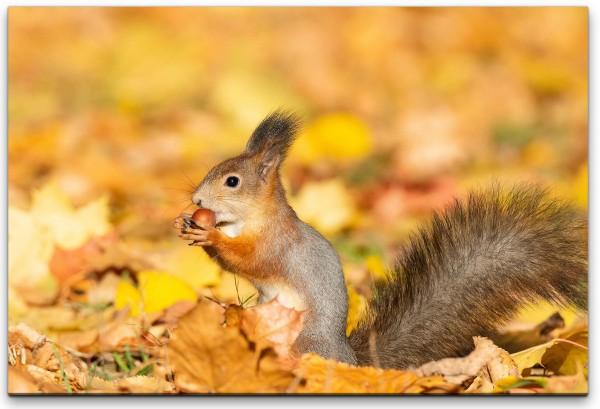 Eichhörnchen im Blätterhaufen Wandbild in verschiedenen Größen