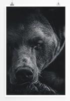 60x90cm Poster Tierfotografie – Porträt eines Braunbären schwarz weiß