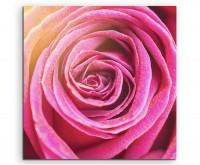 Naturfotografie – Orange pinke Rosenblüte auf Leinwand exklusives Wandbild moderne Fotografie für ih