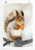 60x90cm Poster Tierfotografie – Süßes Eichhörnchen im Winter