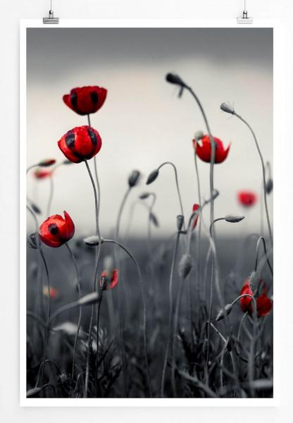 Künstlerische Fotografie – Mohnblumen im Kornfeld 60x90cm Poster