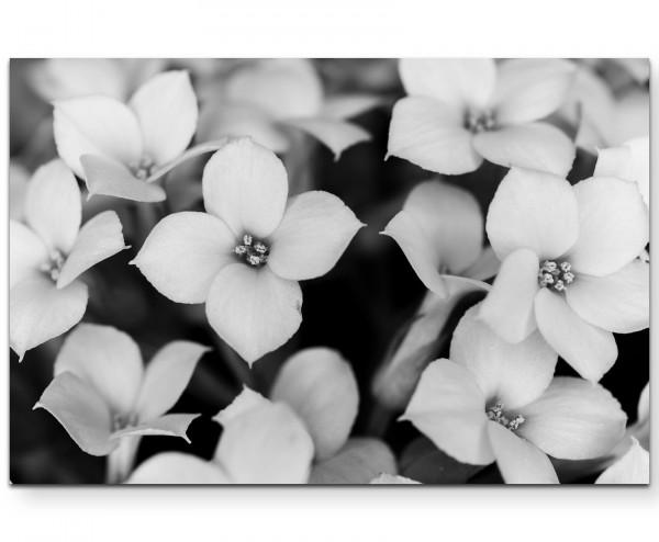 Schwarz-Weiße Blüten - Leinwandbild