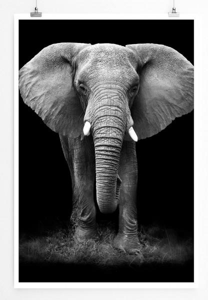 60x90cm Tierfotografie Poster Großer Elefanten Von Vorne Schwarz Weiß