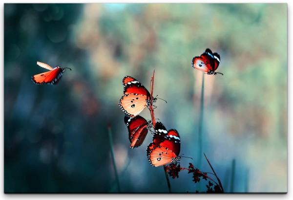 Schmetterlinge an Grashalmen Wandbild in verschiedenen Größen