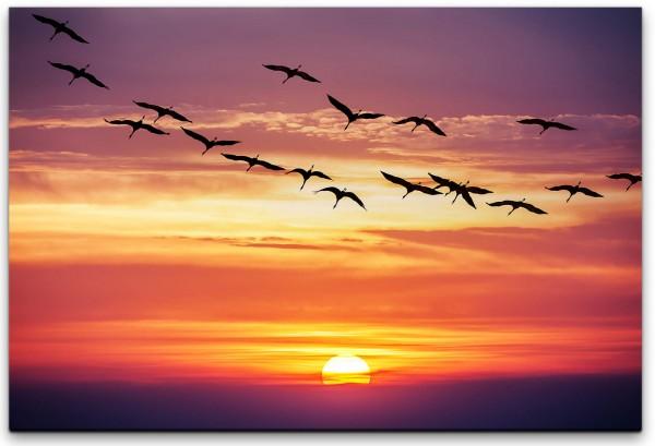 Vögel im Sonnenuntergang Wandbild in verschiedenen Größen
