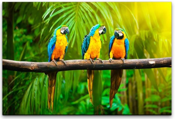 Papageien auf einem Ast Wandbild in verschiedenen Größen