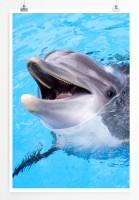 60x90cm Poster Tierfotografie – Lächelnder Delfin
