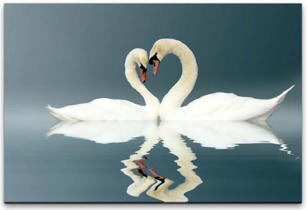 liebendes Schwanenpaar Wandbild in verschiedenen Größen