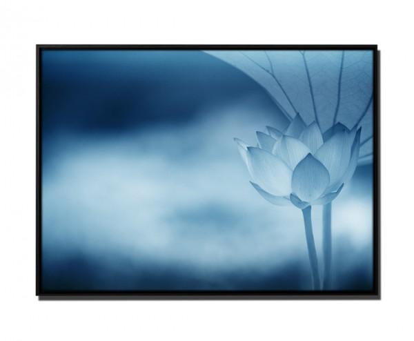 105x75cm Leinwandbild Petrol Nahaufnahme Lotusblüte