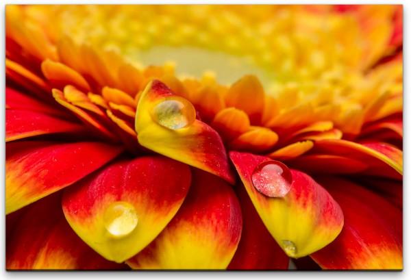 Blüte mit Wassertropfen Wandbild in verschiedenen Größen