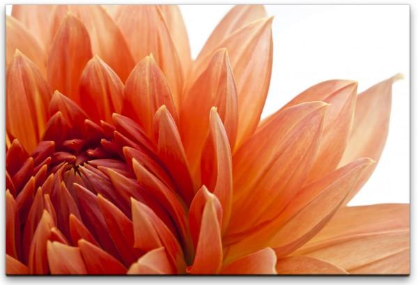 orange Dahlien Blüte Wandbild in verschiedenen Größen