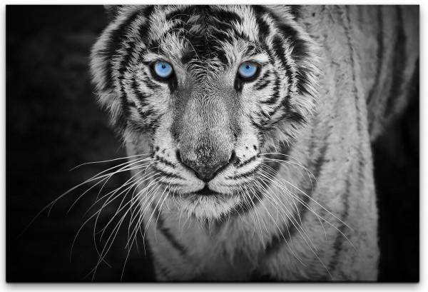 Weißer Tiger Wandbild in verschiedenen Größen