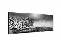 150x50cm Leopard Baumstamm Afrika Wildnis