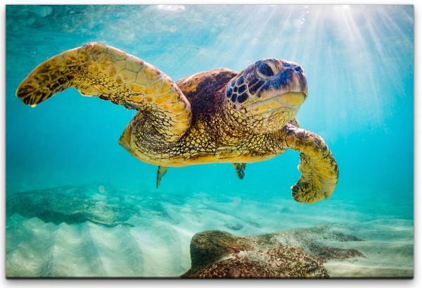 Schildkröte im Wasser Wandbild in verschiedenen Größen
