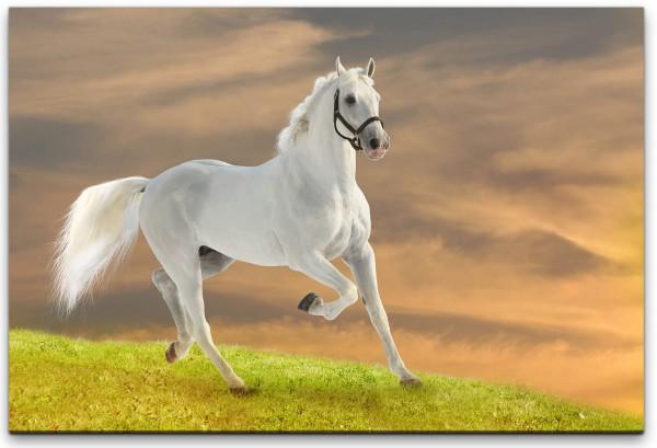 Weißes Pferd Wandbild in verschiedenen Größen