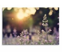 120x80cm Wandbild Lavendel Feld Blumen Sonnenstrahlen