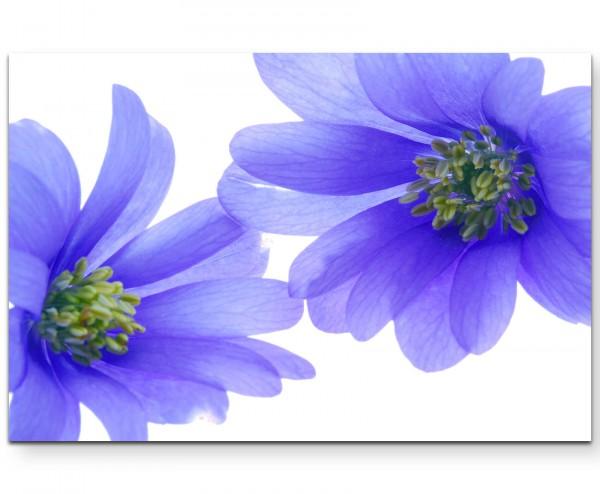 Fotografie – blaue Blüten - Leinwandbild