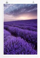 60x90cm Poster Landschaftsfotografie – Lavendelfelder bei Sonnenaufgang