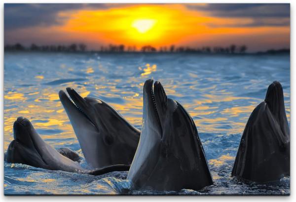 Delfine im Wasser Wandbild in verschiedenen Größen