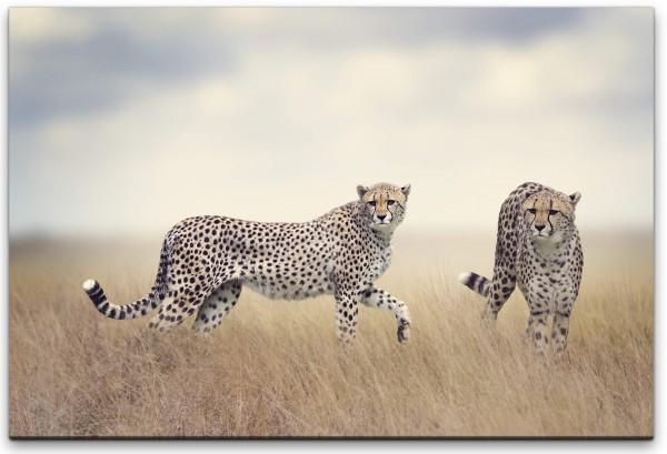 Geparden in Afrika Wandbild in verschiedenen Größen