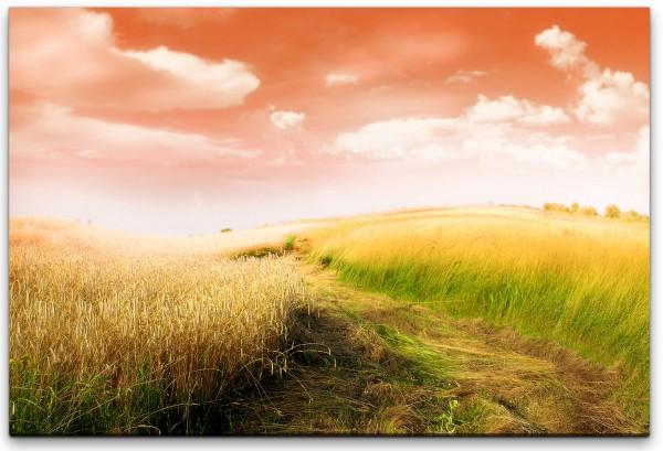 Ackerbau und Felder Wandbild in verschiedenen Größen
