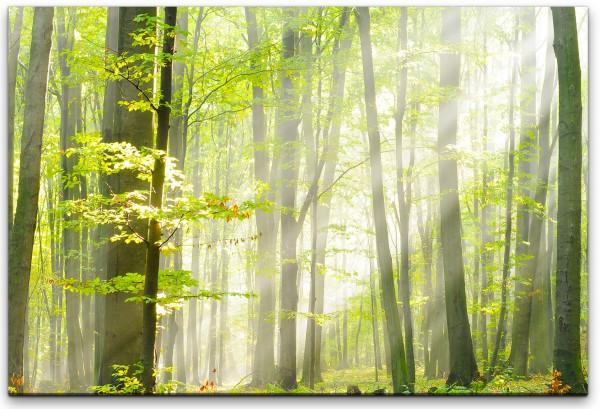 Waldgebiet im Herbst Wandbild in verschiedenen Größen