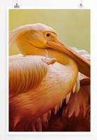 60x90cm Poster Tierfotografie – Porträt zweier Pelikane