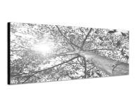 150x50cm Baumkrone Blätter Frühling Sonnenlicht