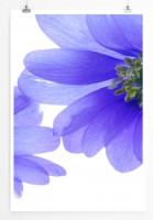 60x90cm Naturfotografie Poster Kornblumen