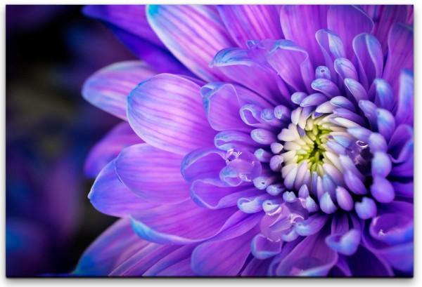 Lila Blume Wandbild in verschiedenen Größen