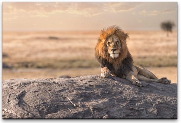 Löwe auf einem Stein Wandbild in verschiedenen Größen