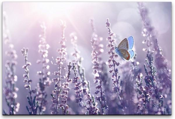 Lavendel und Schmetterlinge Wandbild in verschiedenen Größen