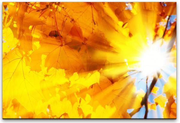 Herbstblätter in Sonne Wandbild in verschiedenen Größen