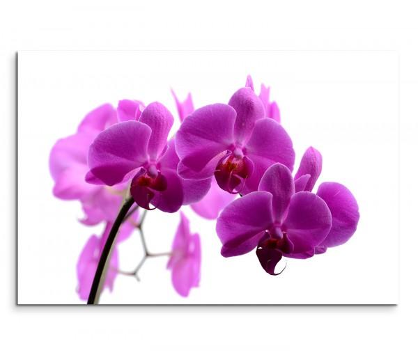 120x80cm Wandbild Orchidee Blume Blüte Nahaufnahme
