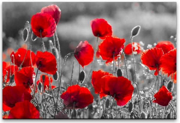 Rote Mohnblumen im Feld Wandbild in verschiedenen Größen