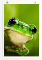 60x90cm Tierfotografie Poster Süßer Frosch