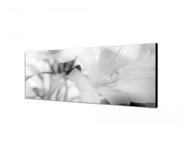 150x50cm Blüten Floral Farbfilter abstrakt