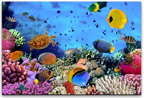 Korallen Kolonie Wandbild in verschiedenen Größen