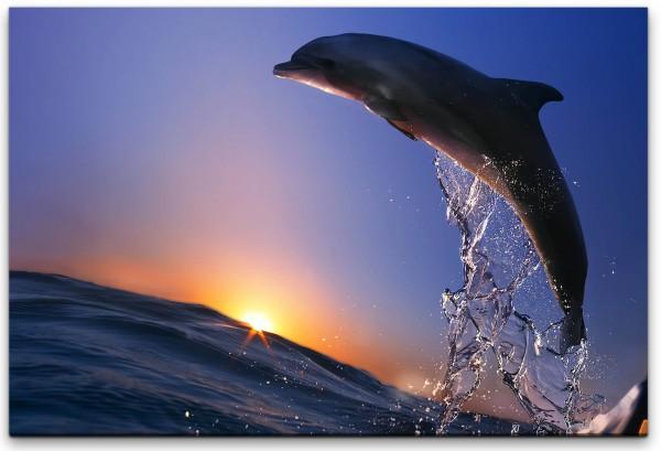 Delfin im Meer mit Wellen Wandbild in verschiedenen Größen
