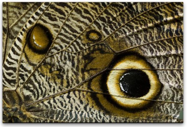 Tropischer Schmetterlings Flügel Wandbild in verschiedenen Größen
