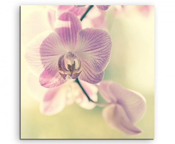 Naturfotografie –  Lila gestreifte Orchideen auf Leinwand