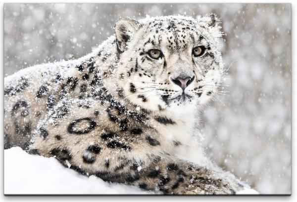 Leopard im Schnee Wandbild in verschiedenen Größen