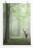 60x90cm Poster Landschaftsfotografie – Hirsch im Nebelwald