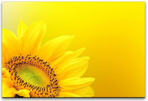 Sonnenblume Nahaufnahme Wandbild in verschiedenen Größen