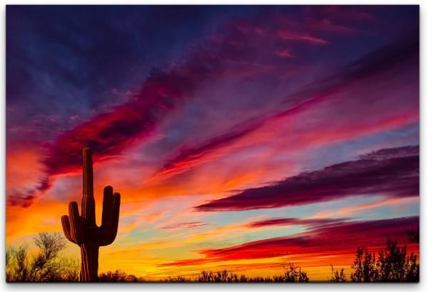 Kaktus im Sonnenuntergang Wandbild in verschiedenen Größen