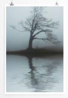 60x90cm Landschaftsfotografie Poster Einsamer Baum in Grau