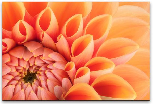 orange Blumenblüte Wandbild in verschiedenen Größen