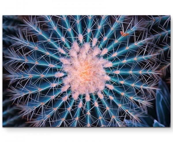 Makrofotografie – blühender Kaktus - Leinwandbild